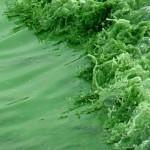 太湖水里充满了蓝藻